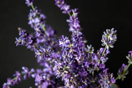 Flowers of lavender on a black background. Lavandula.