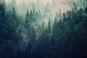 Wall Mural - Misty landscape with fir forest in hipster vintage retro style