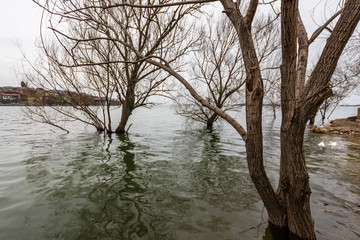 View of Trees on a Cloudy Day in Uluabat Lake, Golyazı, Bursa