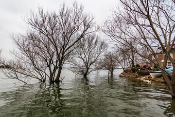 View of Trees on a Cloudy Day in Uluabat Lake, Golyazı, Bursa