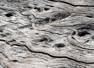 Abstract Surface texture and trenches on the bark of tree trunk