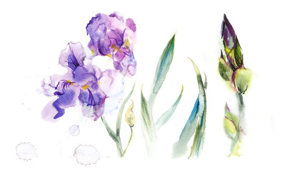 Composition with irises. Flower backdrop. Watercolor hand drawn illustration.