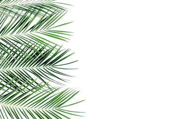 Summer background. Tropical palm leaves on a white background. Summer concept. Flat lay, top view, copy space