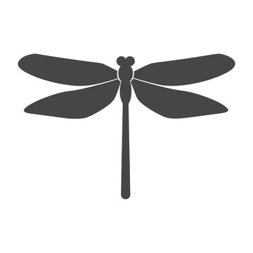 Vector of dragonfly design on white background, dragonfly icon logo