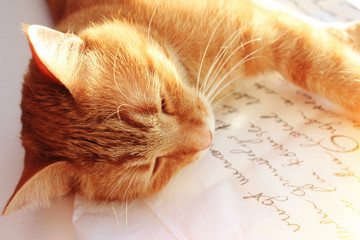 Coziness, comfort, interior, holidays concept - ginger cat with pink roses has a relax
