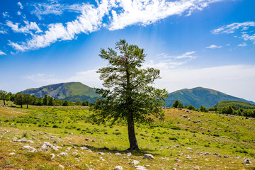 Twisted trees in the Pollino National Park