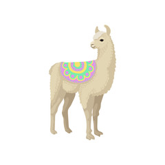 Llama alpaca animal in ornamented poncho vector Illustration on a white background