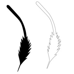 vector isolated silhouette of bird feather, outline
