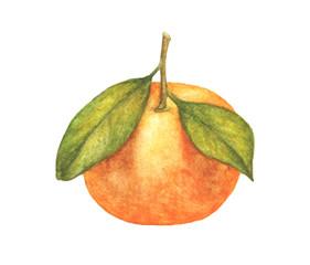 Orange fruit with leaves isolated on white background, watercolor illustration of fruit.