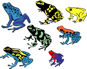 Poison dart frog - color vector illustration