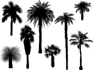 eight palm trees with shadows on white