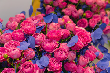 Beautiful purple roses with blue leaves in the shop. Floristics