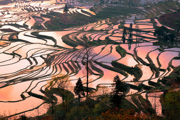 Photo sur Plexiglas Les champs de riz Morning atmosphere of rice fields at Yuan Yang, China.