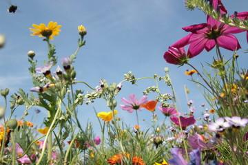 Sommerwiese mit Wildblumen