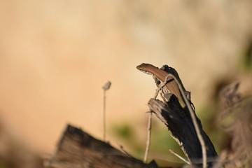 wild lizard sits on a plant