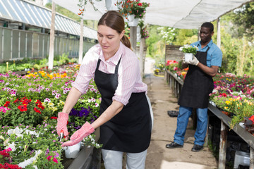 Florist girl working in greenhouse