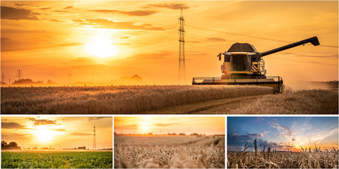 Fotoväggar - Landwirtschaft Collage mit Mähdrescher und Feldern