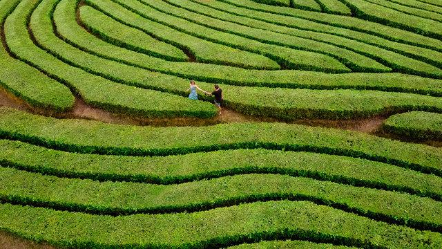 Couple walking in green bush labyrinth