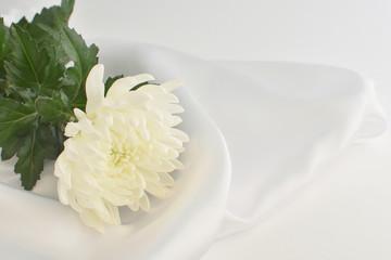 仏事の白い菊の花