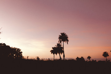 Beautiful silhouettes of palm trees at sunset