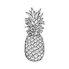Hand drawing vector illustration of pineapple.
