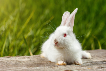 cute white rabbit on natural green background