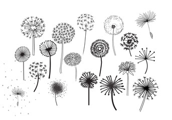 Dandelion Fluffy Seeds Flowers .  Decorative Elements for design, dandelions flowers blooming. Hand Drawn Doodle Style Black And White Drawing Vector Icons Set