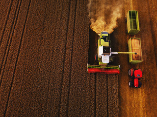Wall Mural - Harvest has just started
