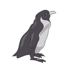 penguin sketch color, vector