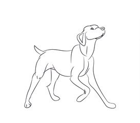 dog asking, lines, vector