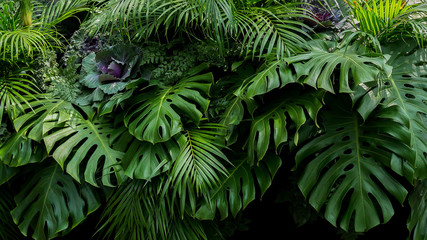 Green tropical leaves of Monstera, fern, and palm fronds the rainforest foliage plant bush floral arrangement on dark background, natural leaf texture nature background. Wall mural
