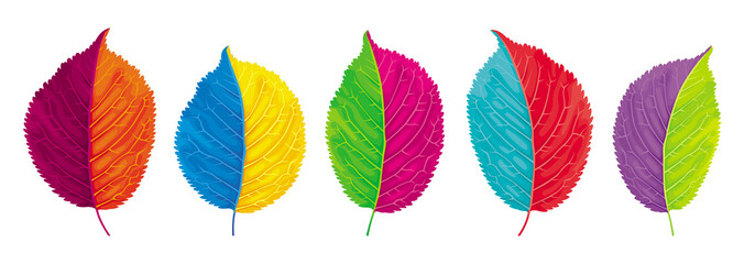 Colorful leaves vector set