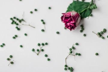 Lonely rose and little green plants on a white background. Instagram background.