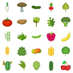 Salad icons set. Cartoon set of 25 salad vector icons for web isolated on white background
