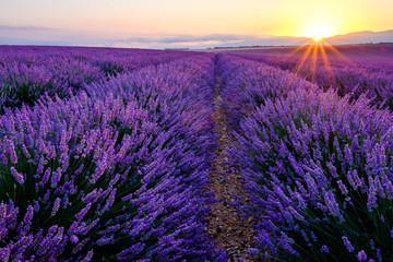 Türaufkleber Lavendel Champ de lavande en fleurs, lever de soleil. Plateau de Valensole, Provence, France.