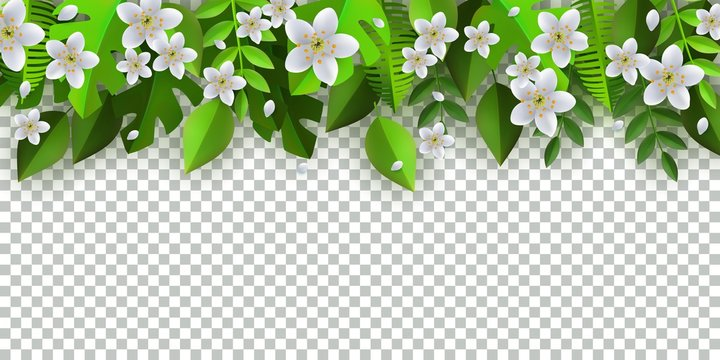Green leaves with white flowers frame template with text space on transparent background. Abstract natural decoration pattern. Summer vacation, oraganic food vector poster illustration