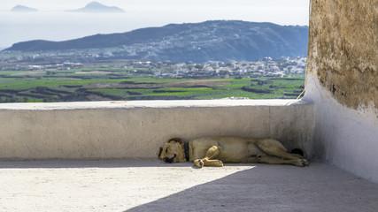 Sleeping dog on the big balcony