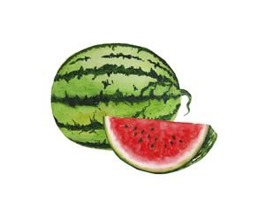 Watermelon illustration  watercolor