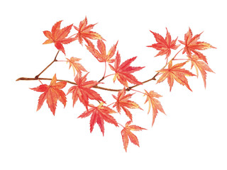 紅葉 水彩イラスト