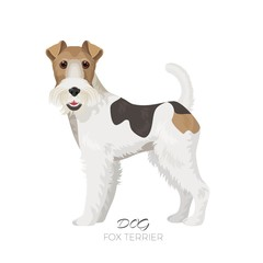 Fox terrier isolated on white backdrop purebred dog