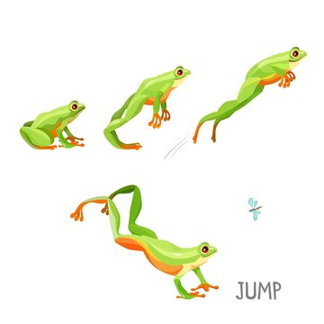 Frog jumping by sequence cartoon vector illustration