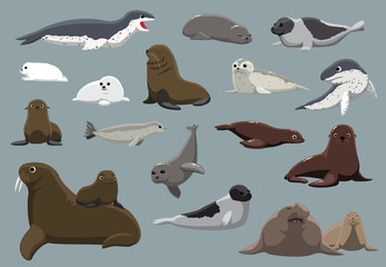 Various Seals Set Cartoon Vector Illustration