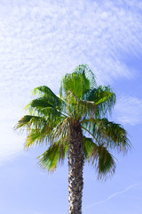 a lonely palm tree, beautiful sky