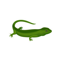 Gecko amphibian creature vector Illustration on a white background