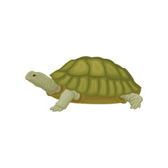 Turtle reptile animal vector Illustration on a white background