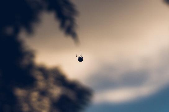Ragno che si cala con la ragnatela