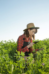Young farmer or agronomist woman examine the clover field