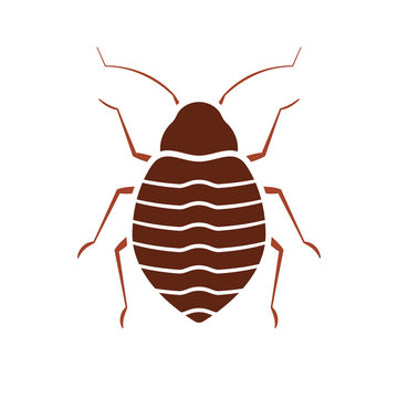 Bed bug icon