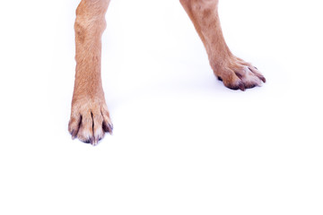 Hind legs of dog isolate