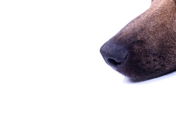 Dog's nose in profile on white background